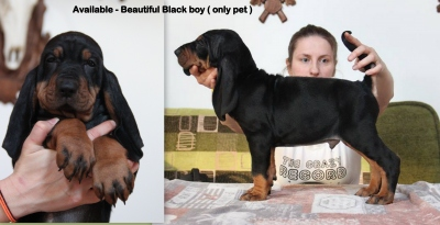 available-black-pet.jpg