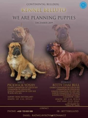 Jorkšírský terrier - fenka s PP